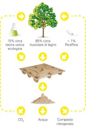 Pallet Inka Ciclo Biochimico